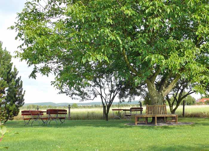 Entspannen unterm Walnussbaum