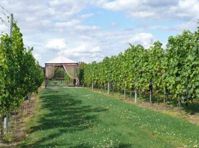 Pavillon im Weinlabyrinth